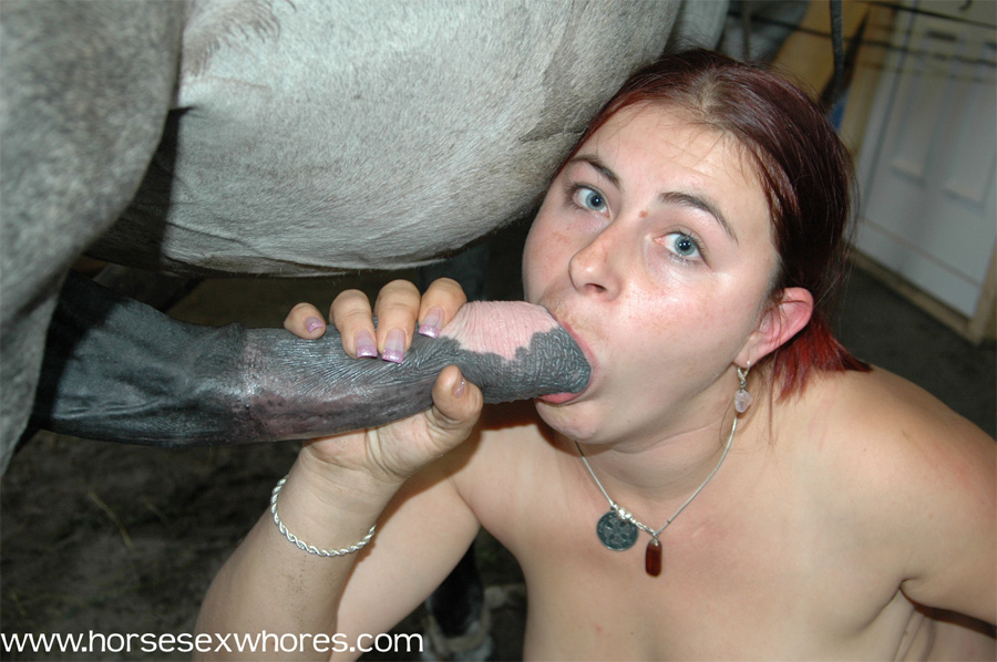 Girl Sucking Horse Cock Animal